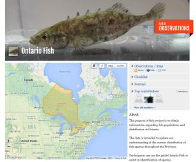 Ontario Fish Project