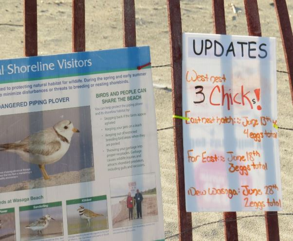 Sign Showing Status of Plover Nests